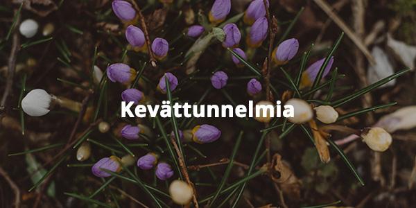 Valkoiset ja violetit crocus-silmut. Bild-ID: ima180363