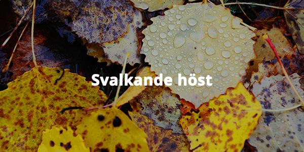 masma17984 Yellowing leaves and raindrops