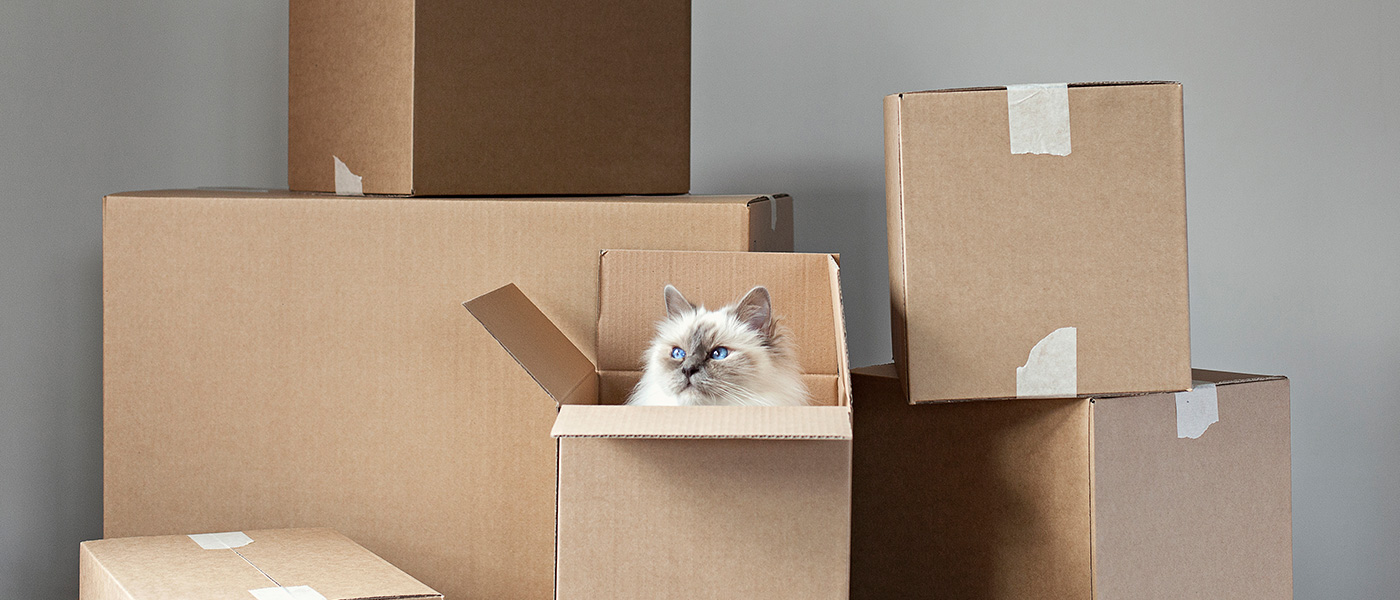 Image ID: scandinav_9q3y. Cat in box among other boxes.